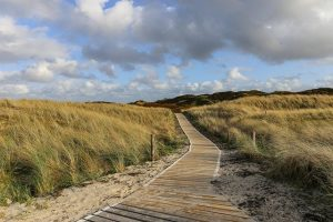 natuur op Texel
